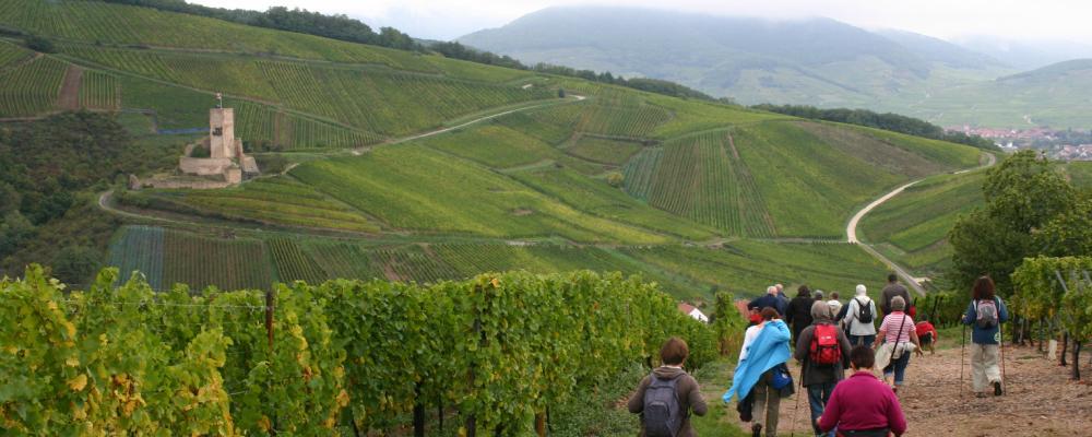 Activités : promenade dans le vignoble - Colmar